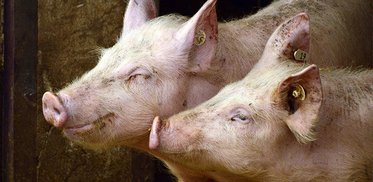 Für mehr Tierschutz - des Deutschen Tierschutzbundes e.V.